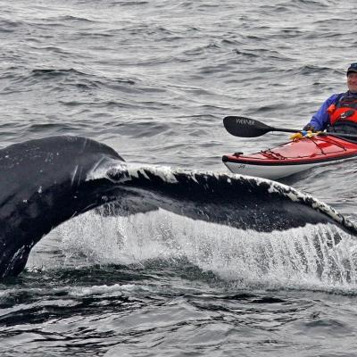 挪威皮划艇观鲸www.nordicvs (1)