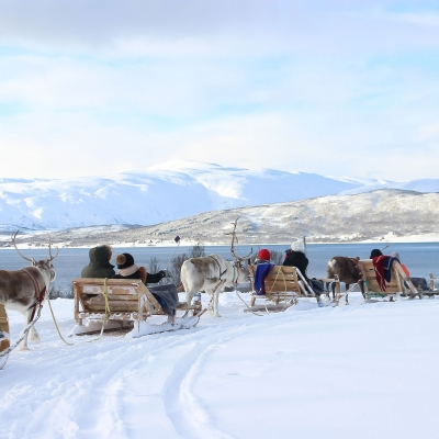鹿拉雪橇www.nordicvs (1)