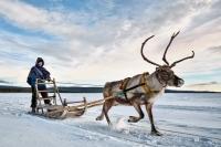 鹿拉雪橇www.nordicvs (3)